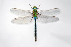 Extreme macro  shots, dragonfly wings detail. isolated on a white background.