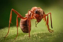 Extreme magnification - Ant in the wild