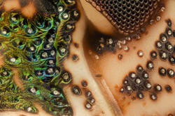 Extreme magnification - Brown Marmorated Stink Bug (Halyomorpha halys) details at 20x
