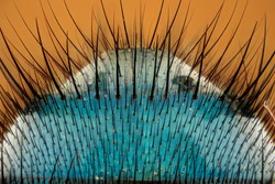 Extreme magnification - Fly body detail