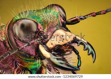 Extreme magnification - Tiger beetle stock photo