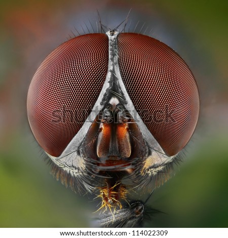Extreme sharp and detailed study of fly head stacked from many shots taken with microscope lens - stock photo