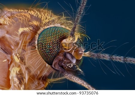 Extreme sharp and detailed study of mosquito head taken with microscope objective stacked from many shots into one photo