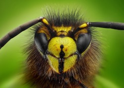 Extreme sharp and detailed study of wasp head taken with microscope objective stacked from many shots into one photo