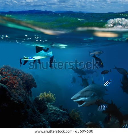 extreme story about the ocean and the surfer that sitting on a surfing board and angry hungry bull-shark surrounded by shoal of fish swimming underwater underneath him - stock photo