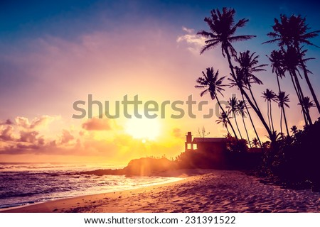 Extremely beautiful  sunset under the coconut plams on Sri Lanka beach. #231391522