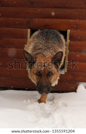 Extremely confident the dog imagines a model that goes courageously on a podium in extreme conditions #1355591204