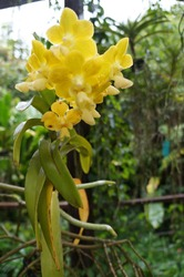 Exuberant orchids, tropical and colorful flowers