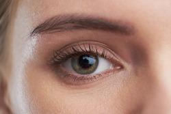eye brown macro shot. Close-up portrait of a beautiful female eye