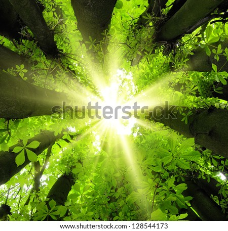 Eye-catching canopy scenery in the forest with the sun beautifully framed by lush trees