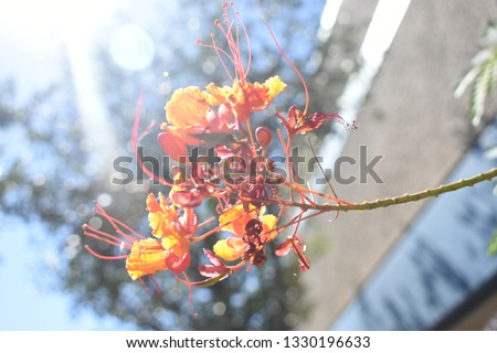 Eye catching flowers with vibrant colors #1330196633