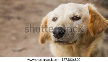 eye dog closeup  #1273836802