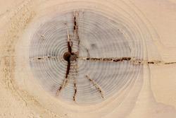 Eye like knot crack on wood board
