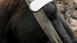 Eye of a crying horse, tied horse, animal cruelty, animal exploitation, tired horse, sad horse