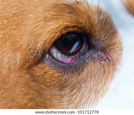 Eye of a dog , macro shot , focus on a center.