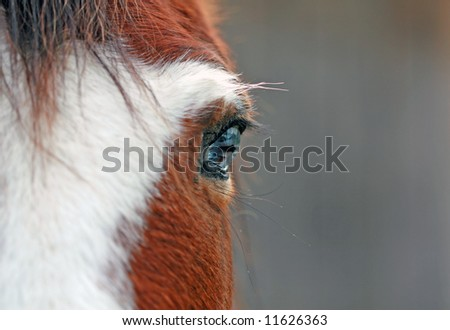 Eye Of A Horse - stock photo