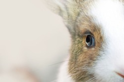 Eye of a  rabbit .Soft focus and shallow depth of field composition.
