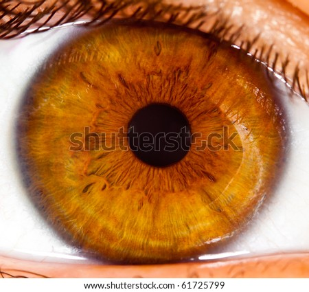Eye of the person, a pupil photographed close up