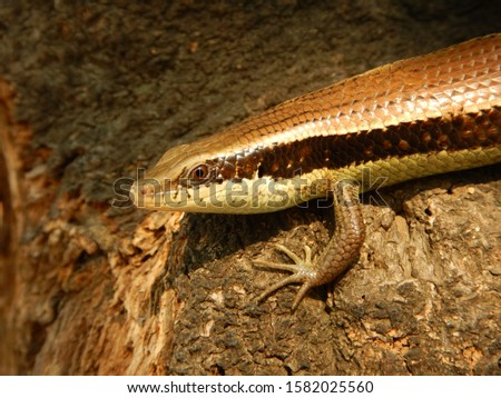 eye to eye with a lizard