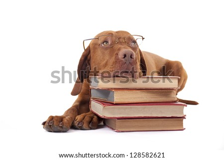 eye-wear wearing golden color pure breed dog laying on floor resting head on a pile of books