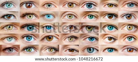 Eyes are many