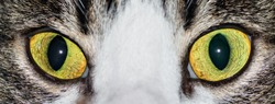 Eyes of a cat in the foreground