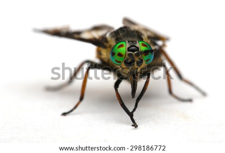 Eyes of an insect. Portrait  Gadfly. Hybomitra horse fly head closeup  #298186772