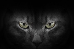 Eyes of black cat in dark, Hypnotic Cat Eyes