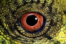 Eyes of lizard forest dragon, reptilian closeup eyes