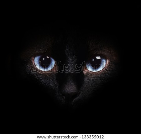Eyes of the siamese cat in the darkness