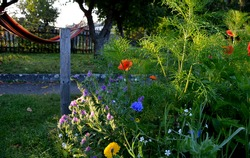 fabric rainbow hammock with colorful stripes hanging in the morning sun among the apple trees below it blooms bee meadow sowing annuals for plenty of pollen, sunrise, textile hanging bed