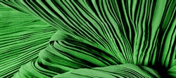 Fabric silk pleated green. This beautiful quality fabric has an excellent corrugated wrinkled texture, drape and semi-curved. Ideal for making your design. texture, background, pattern.