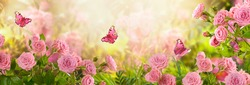 Fabulous blooming pink rose flower summer garden and flying fantasy peacock eye butterflies on blurred sunny shiny glowing background, mysterious fairy tale spring floral wide panoramic holiday banner