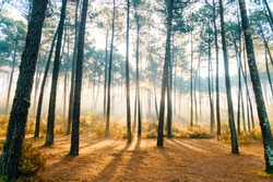 Fabulous european forest.  Picturesque morning sunrise. Fairy tale scenic view.  Magnificent sun rays in pine trees.  Beautiful  nature landscape. Vivid colors. Sun light on grass. Magic view of trees