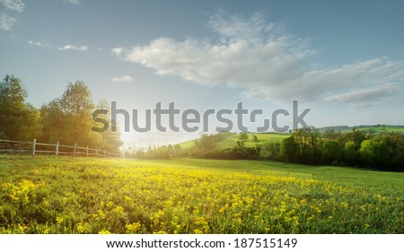 Fabulous landscape, field early in the morning , beautiful yellow flowers in the foreground #187515149