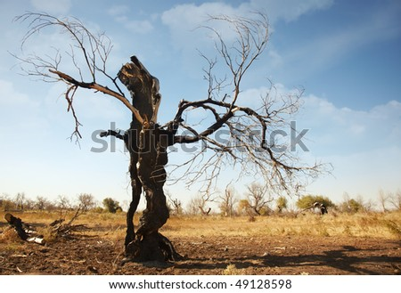 Fabulous view of the single dead burnt tree in arid place