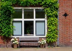 Facade of typical Dutch house, brick walls, wooden bench and windows surrounded and covered with green climbing plants in popular neighborhood street, Netherlands