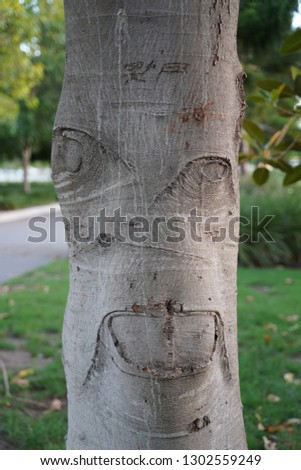 face etched on a tree trunk #1302559249