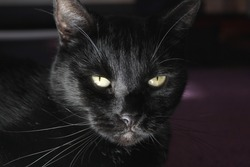 Face of a black cat with yellow eyes
