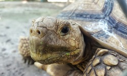 Face of the turtle.