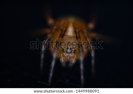 face to face with a cross spider