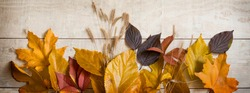 Facebook cover. Autumn background - yellow and red autumn leaves on a light wooden background.