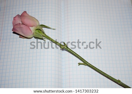Fading rosebud in a quad and margin exercise book #1417303232