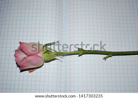 Fading rosebud in a quad and margin exercise book #1417303235