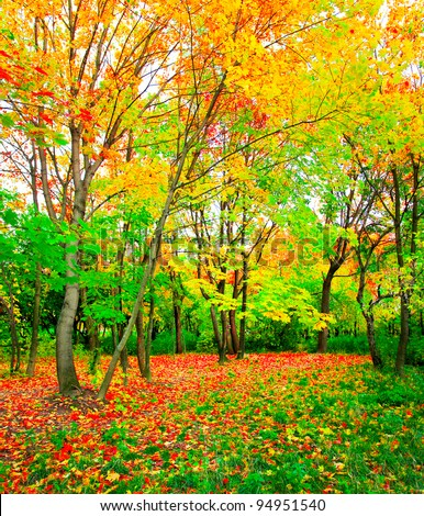 Fairy autumnal forest