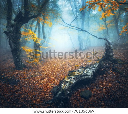 fairy forest in blue fog....