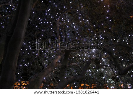 Fairy Lights in Olive Tree #1381826441