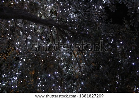 Fairy Lights on Olive Tree #1381827209