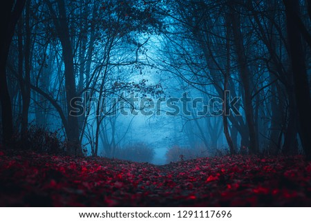 Fairy Mysterious Forest. Mystical atmosphere. Paranormal another world. Stranger forest in a fog. Dark scary park with red leaves. Background for wallpaper.