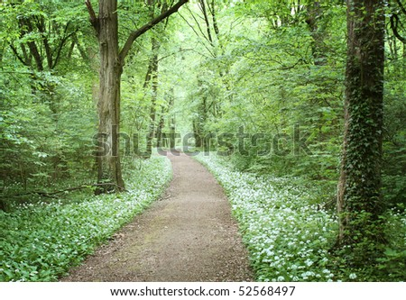fairy tale forest - stock photo